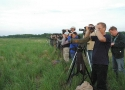thumbs observations of great snipe in the valley narew river Birds rarities