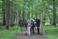 Some observations of Bialowieza Forest birds is easier thanks to the telescope © Arek & Mateusz Szymura