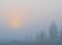 dawn-at-the-glade-in-bialowieza-forest