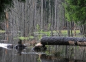 bialowieza-forest-03