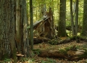 bialowieza-forest-05