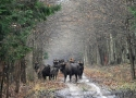 a-meeting-on-road-in-the-primaeval-forest-in-bialowieza-forest