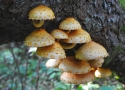 autumn-bialowieza-forest-treasures