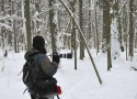 winter-plener-in-bialowieza-primaeval-forest