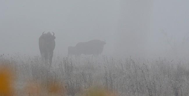 Bialowieza Forest fog