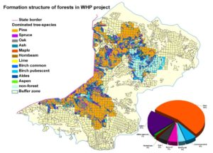 Did Belarusian were able to stop spruce bark beetle outbreak in their part of Bialowieza Forest?